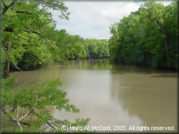 A downriver view on Bayou deView near Cotton Plant