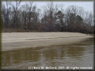 Typical white sand beaches along the Sabine River